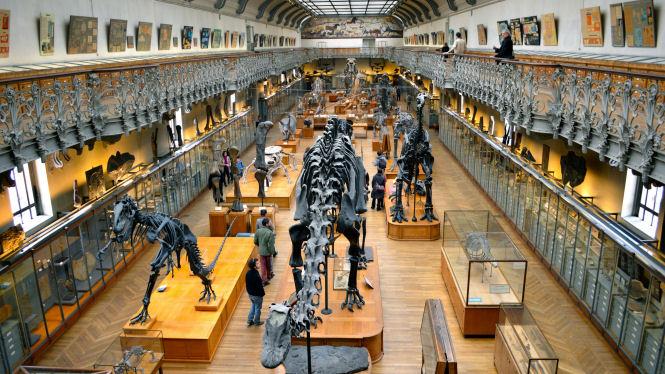 Museum Histoire Naturelle Paris Muséum D'histoire Naturelle de